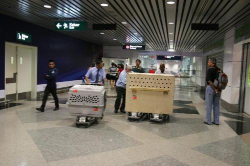Transportation of a box in an airport